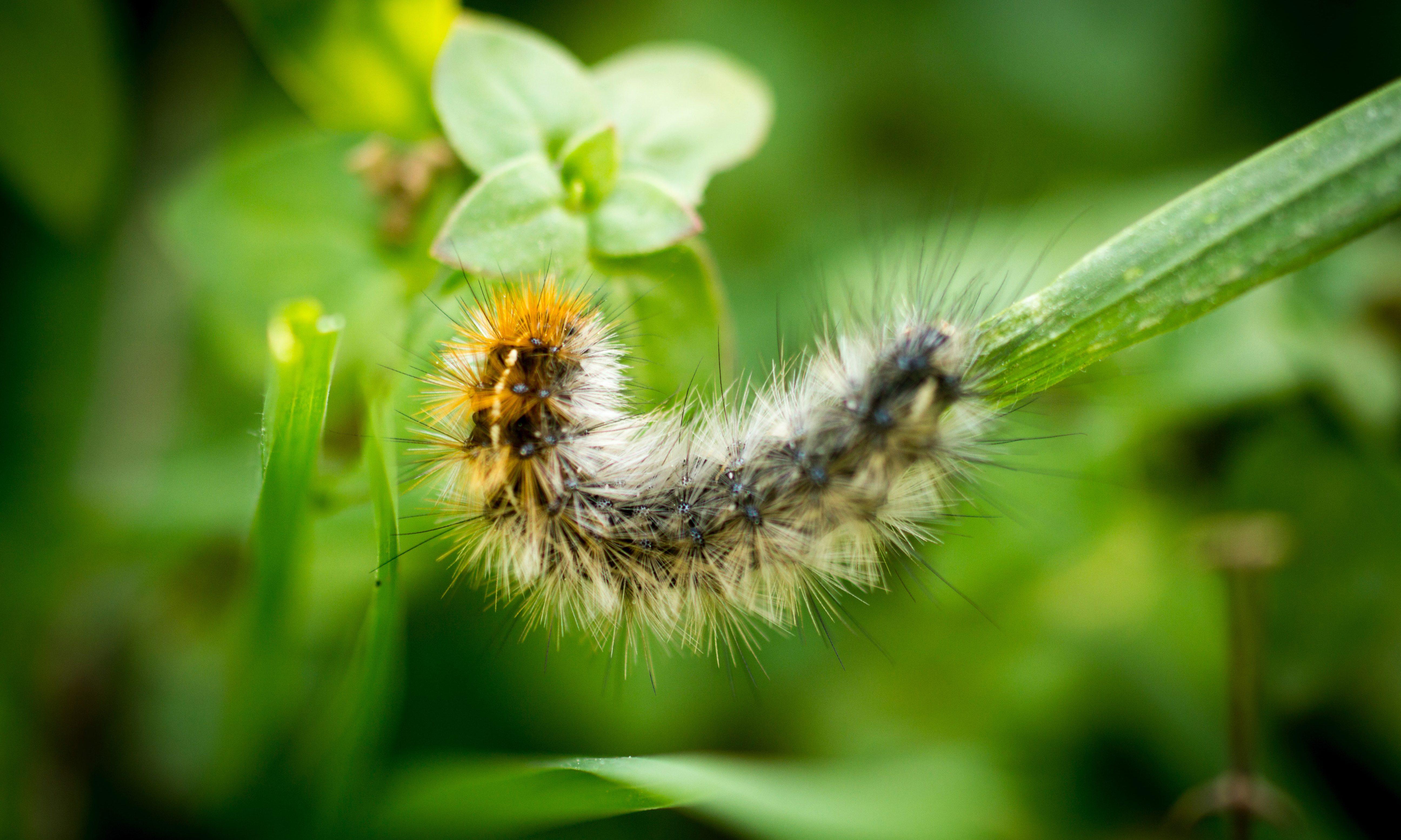 Caterpillar in Nature