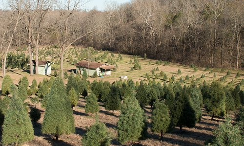 Your Guide To Christmas Trees In Southwest Missouri