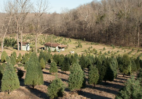 where to recycle your old christmas tree in springfield mo and southwest missouri