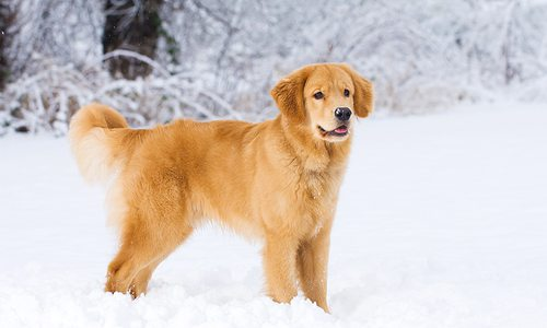 dog in snow during the winter