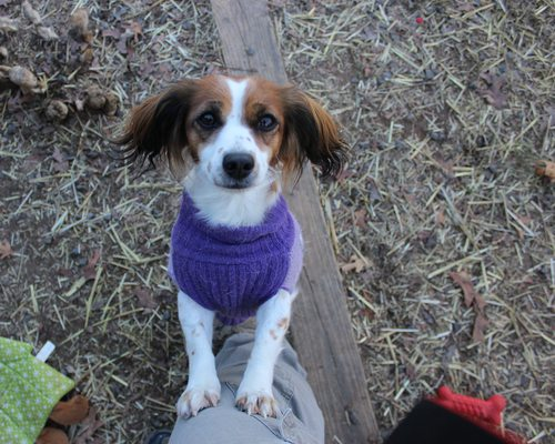 Dog Friendly Activities in southwest MO