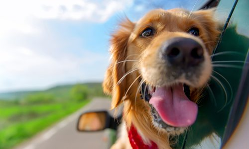 Dog-Friendly Places in Springfield, MO