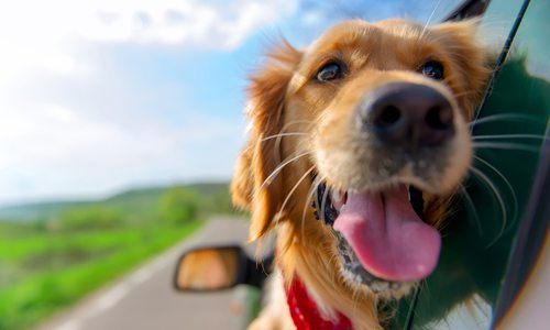 Dog-Friendly Activities in 417-land