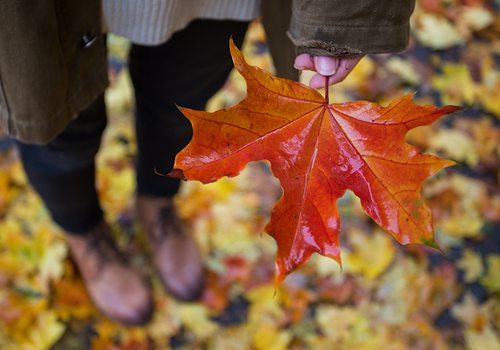 girl holding a leaf in fall