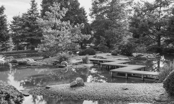 garden in black and white