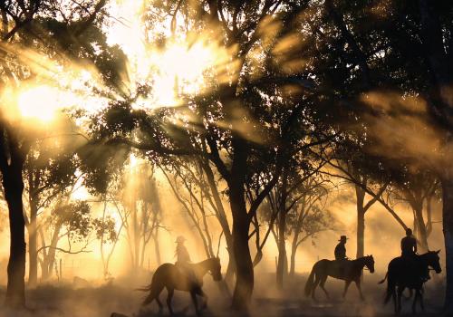 Horseback Riding and Winery