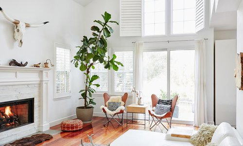 Breathe Life Into Your Home with House Plants