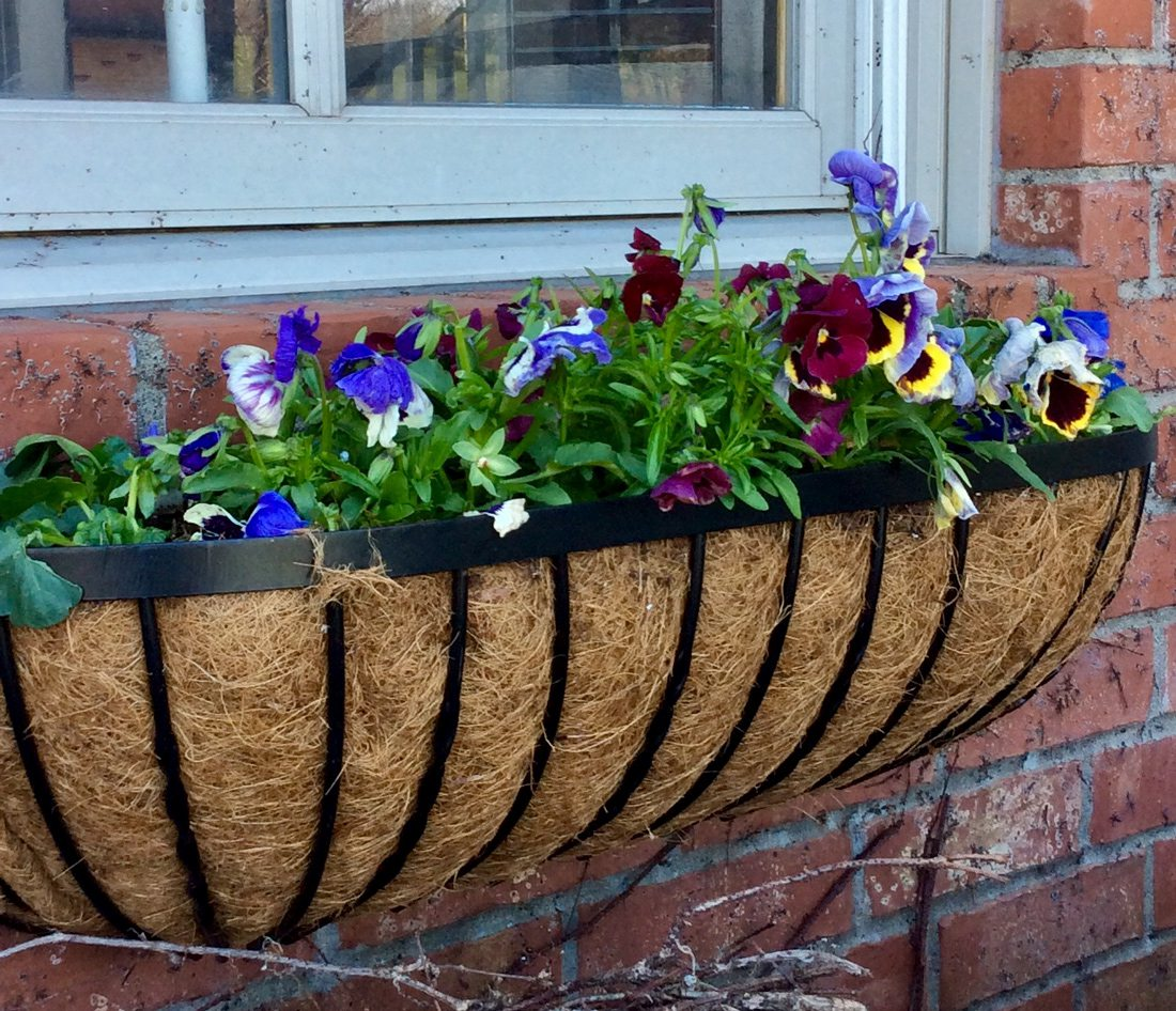 Wrought iron window boxes on Colonial-style home.