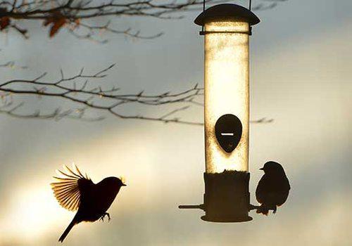 Beyond the Bird Feeders