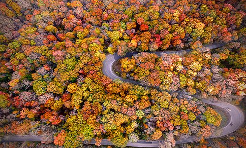Drone shot of fall leaves and winding road