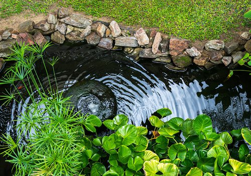 Backyard Pond Stock Image