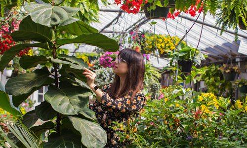 Find Garden Plants, Floral Arrangements and More at Schaffitzel's Flowers