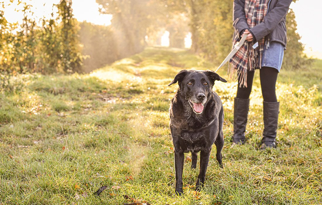 Dog walking on a trail stock image