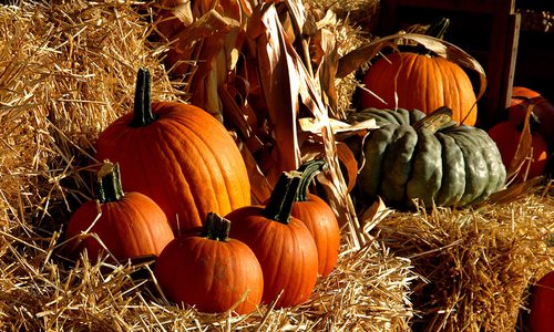 Pumpkins sitting on hay bales
