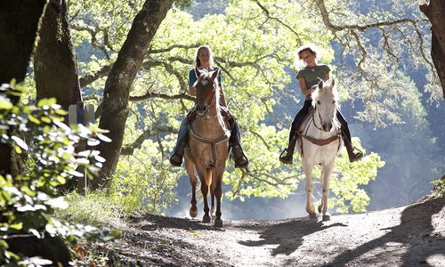 Horseback riders on trail stock image