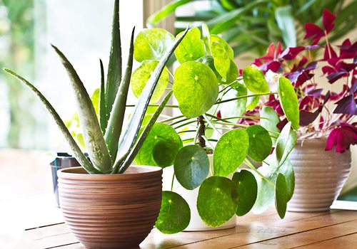 Stock image of houseplants