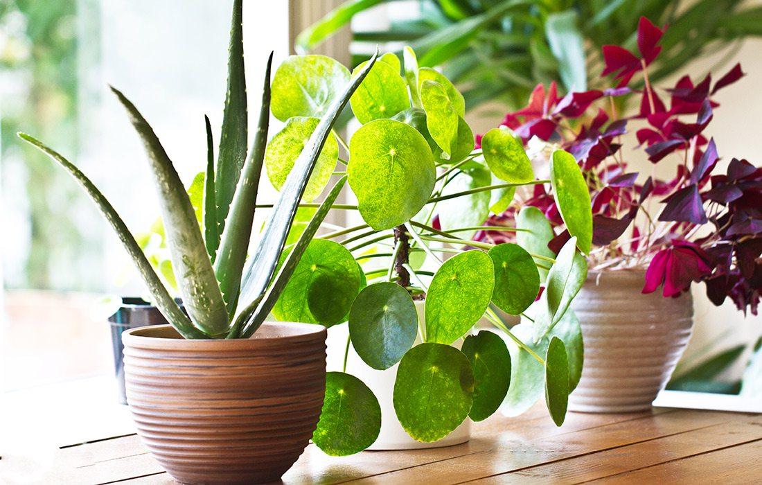 Stock image of houseplants