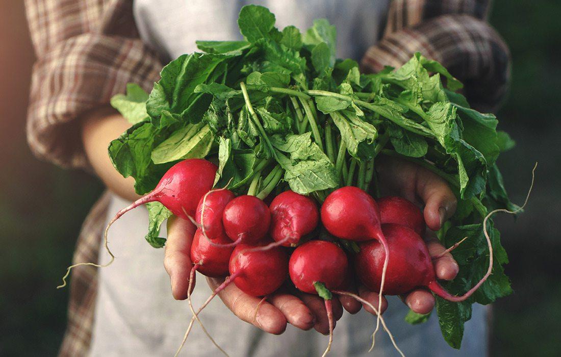 Stock photo of radishes