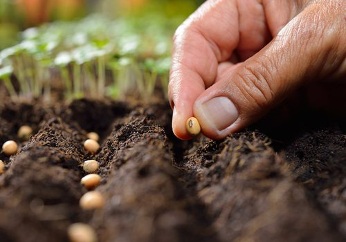 Seed planting close up stock image.