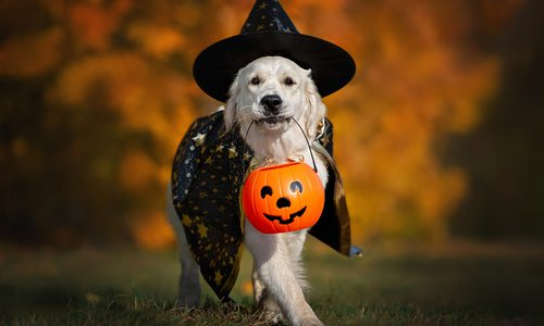 Dog trick or treating stock photo