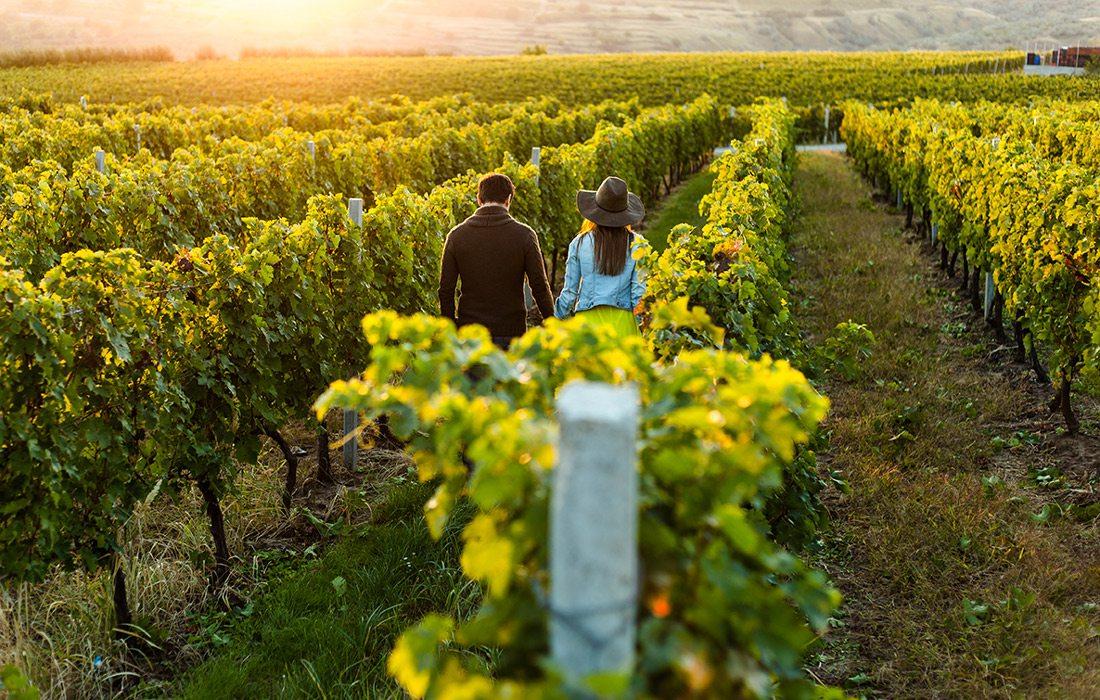 Vineyard walk stock photo