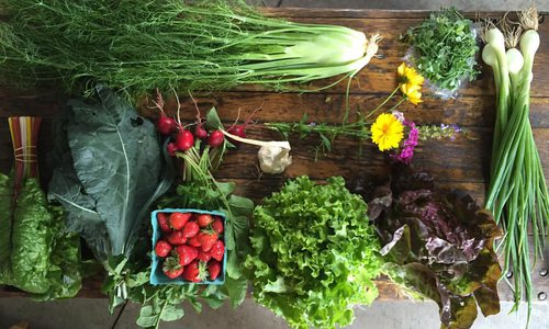 Urban Roots Farm's Farmstand