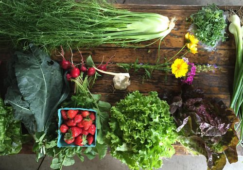 fresh produce from Urban Roots Farm