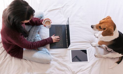 Woman working from home in bed with a dog